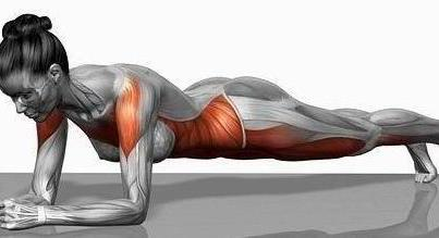 the muscles used when planking