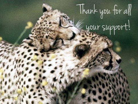 Cheetahs-in-love-
